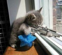 terror cat, copyright unknown